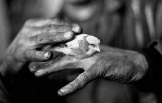 Picture of miner's hands holding a canary