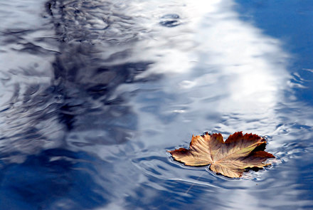 Picture of a leaf floating on blue water